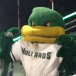 Madison Mallards mascot